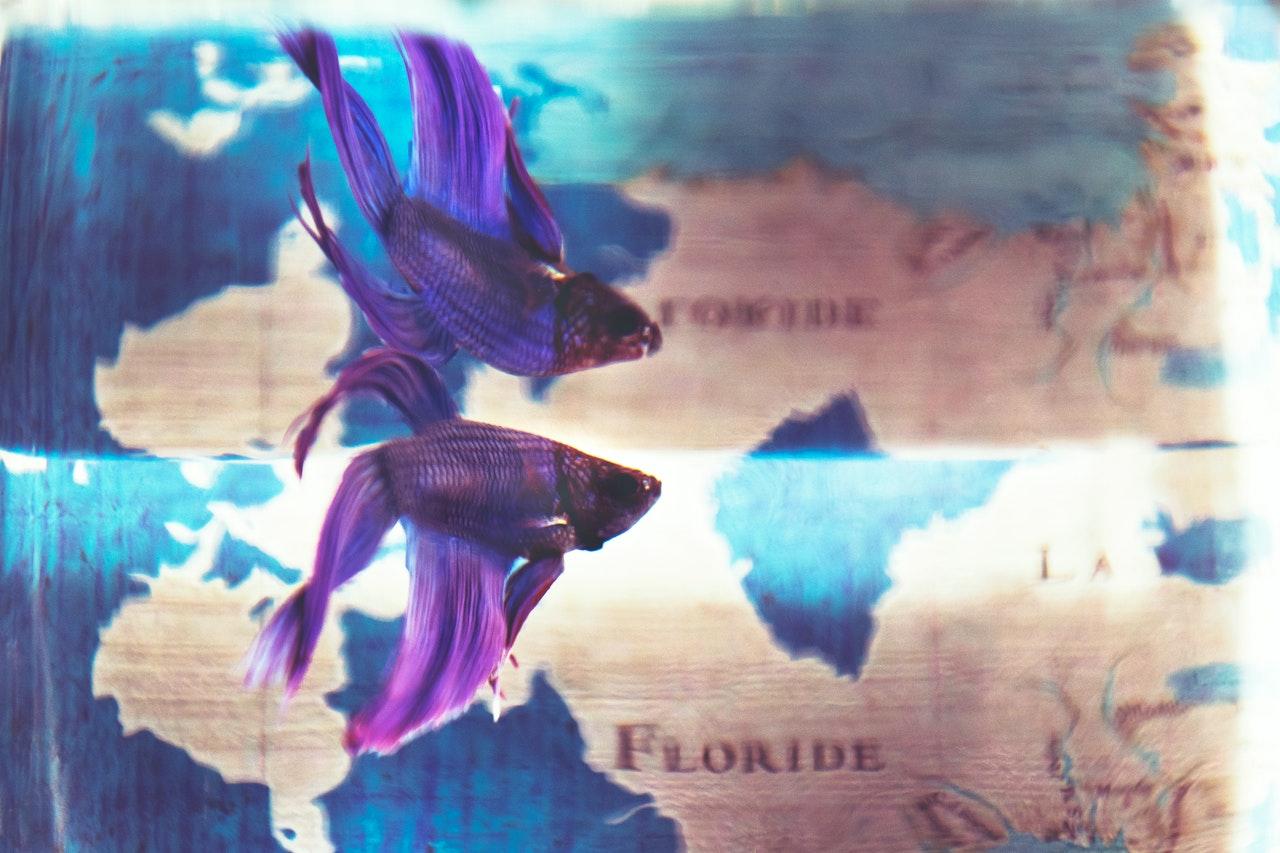 fait poissons volants
